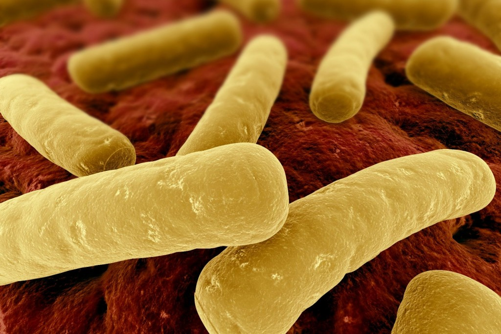 clostridium difficile Clostridium difficile is a gram-positive, anaerobic, spore-forming bacillus that is responsible for the development of antibiotic-associated diarrhea and colitis.