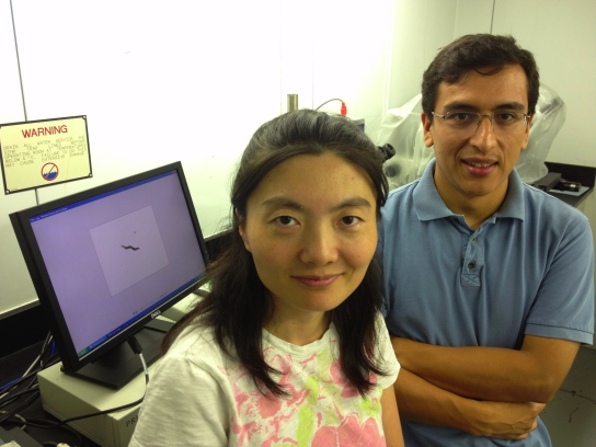Rice U.'s Zhong Lab Analyzes Mutant Worms' Movements To Study Gene Networks