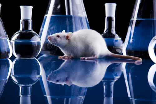 Laboratory rat breast cancer research