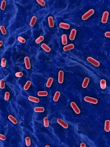 Study Reveals Probiotics Promote Remission In IBD, Ulcerative Colitis, But Not Crohn's Disease