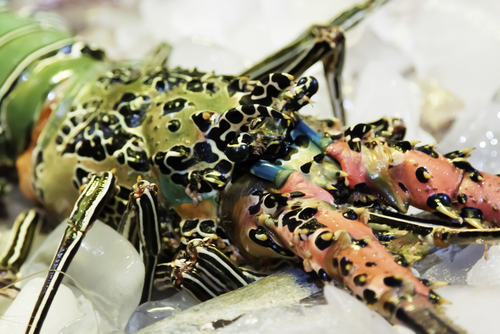 UT Houston Biologist Researches Whether Lobsters (And Other Invertebrates) Feel Pain