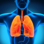New Hope For COPD Sufferers In Lung Regeneration