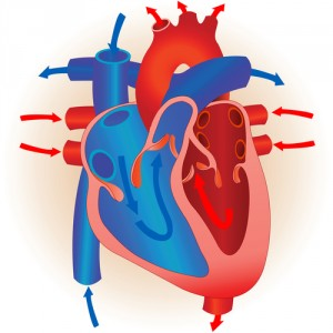 heart and oxygen