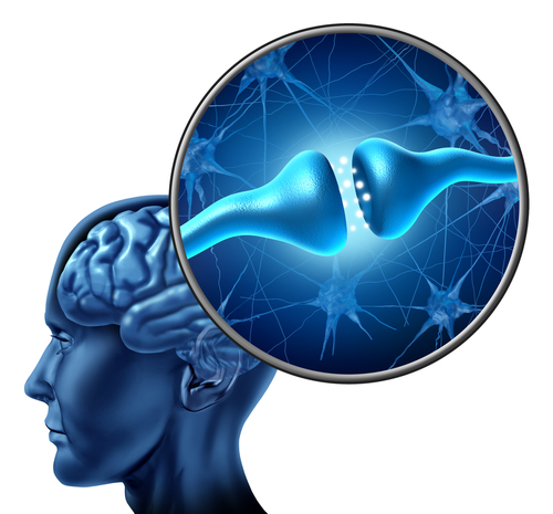 Better Cognition May Be Due to Gene Variant Found in 20% of