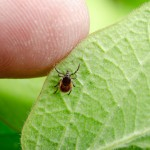 Lyme Disease Bacteria Now Endemic To Texas; Likely To Stick Around, Study Finds