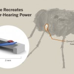 UT Austin Researcher Developers New Hearing Aid Based On Fly's Super-Hearing Power