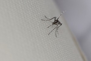 Chikungunya Virus Confirmed in Dallas Traveller Who Visited The Caribbean