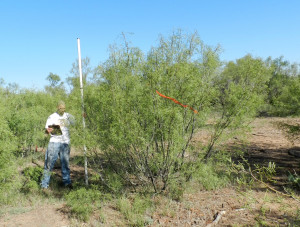 Texas A&M AgriLife Research Study Highlights Mesquite As A Complementary Biofuel Feedstock