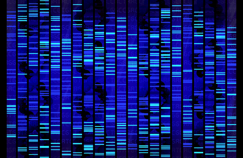 BCM Experts Publish Policy Special Journal on Integration of Genetic Sequencing