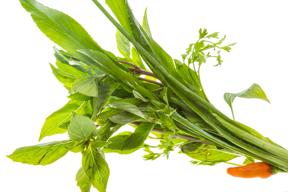 New Drug Candidate Based On Asian Herb A Potentially Promising Ebola Virus Disease Medicine