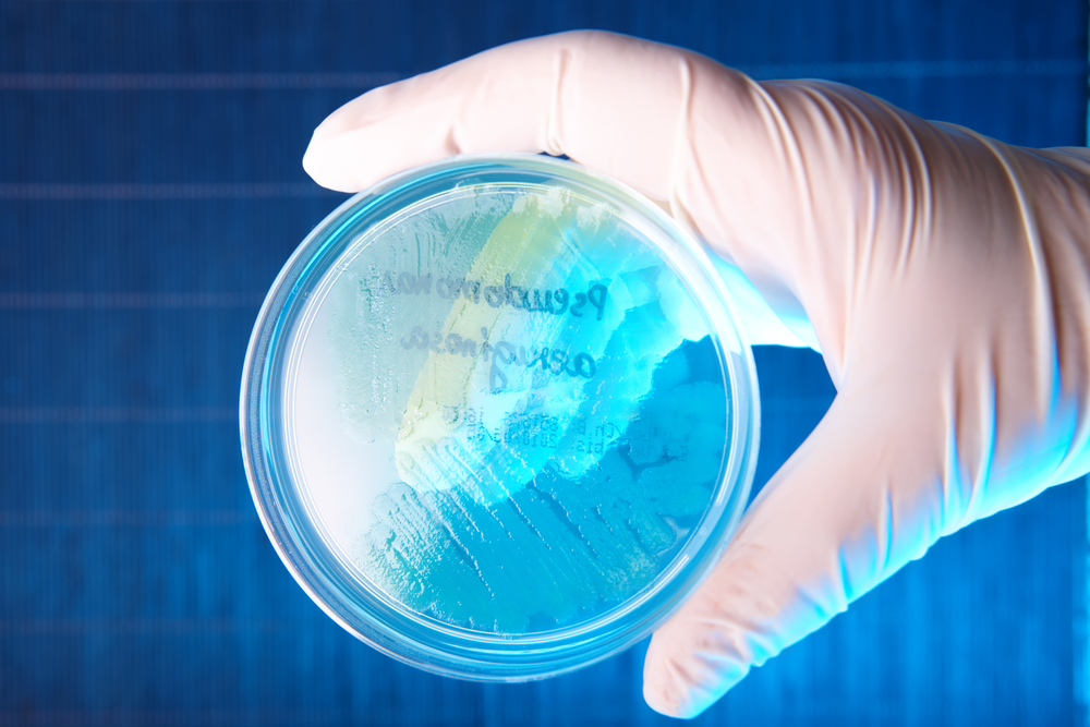 Cystic Fibrosis Study at UT Austin Develops New Method For Studying Deadly Bacterium