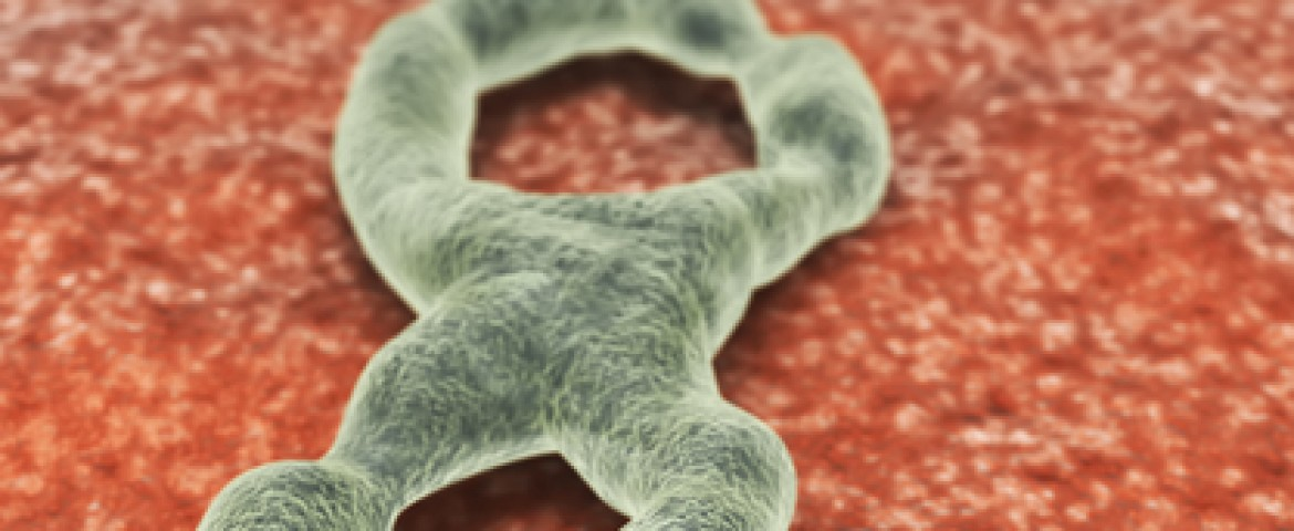 Ebola Treatment Target of $28 Million NIH Award