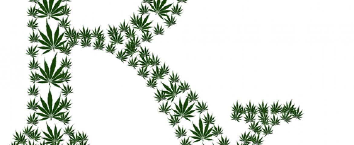 marijuana for medicinal purposes essay Persuasive speech legalize marajuana medicinal purposes join login the research paper factory join search browse to persuade the audience to support the legalization of marijuana.